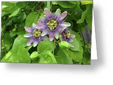 Purple Passion Vine Greeting Card