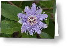 Purple Passionflower #2 Greeting Card