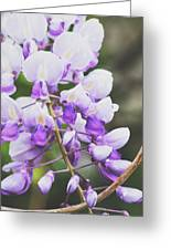 Purple Petals Greeting Card