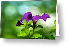 Purple Petunia On A Cool Spring Day Greeting Card