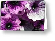 Purple Petunia Paradise Greeting Card