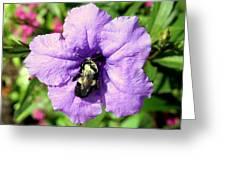 Purple Petunia With A Bee Greeting Card