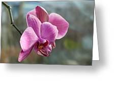 Purple Phalaenopsis Orchid Greeting Card