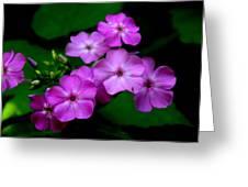 Purple Phlox By Earl's Photography Greeting Card
