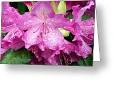 Purple Pink Horizontal Greeting Card
