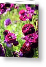 Purple Poppies Greeting Card