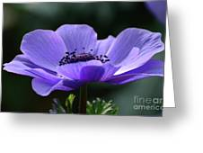 Purple Poppy Mona Lisa Greeting Card