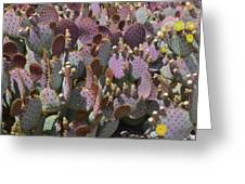 Purple Prickly Pear 2 Greeting Card