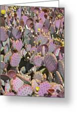 Purple Prickly Pear 3 Greeting Card