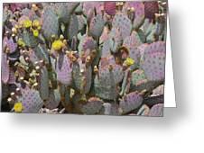 Purple Prickly Pear 1 Greeting Card