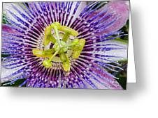 Purple Radial Greeting Card
