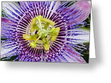 Purple Radial Greeting Card