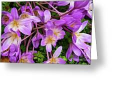 Purple Rain Lilies Greeting Card