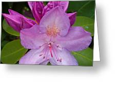 Purple Rhododendron Greeting Card