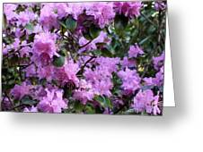 Purple Rhododendrons Greeting Card