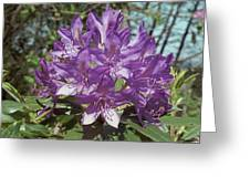 Purple Rhody Greeting Card