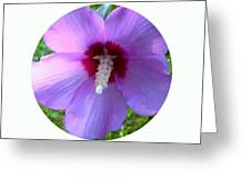 Purple Rose Of Sharon In Circle Frame Greeting Card