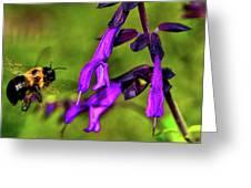 Purple Salvia 002 Greeting Card