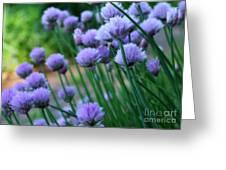 Purple Scallions Greeting Card