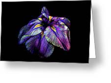 Purple Siberian Iris Flower Neon Abstract Greeting Card