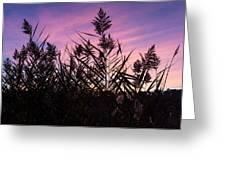 Purple Silhouette  Greeting Card