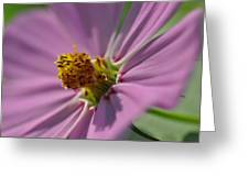 Purple Soft Petals Greeting Card