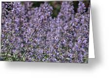 Purple Spikes Flora Impression 6.8.17  Greeting Card