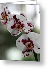Purple Splash Orchid 2 Greeting Card