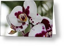 Purple Splash Orchid 3 Greeting Card