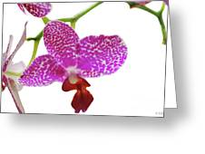 Purple Spotted Orchid On White Greeting Card