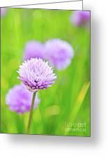 Purple Spring 11 Greeting Card