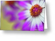 Purple Spring 12 Greeting Card