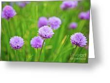 Purple Spring 14 Greeting Card