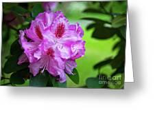 Purple Spring 15 Greeting Card