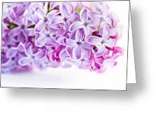 Purple Spring Lilac Flowers Blooming Greeting Card