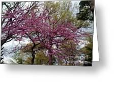 Purple Spring Trees Greeting Card by Rachel Maynard
