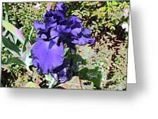 Purple Springtime Iris  Greeting Card