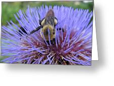 Purple Star Burst II Greeting Card