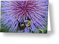 Purple Star Burst Greeting Card