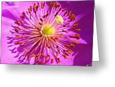 Purple Starburst Greeting Card