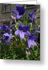 Purple Stars Greeting Card