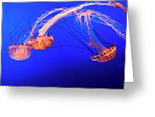 Purple Striped Jelly Greeting Card