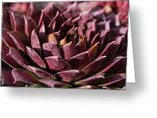 Purple Succulent Greeting Card