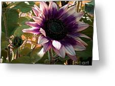 Purple Sunflower Abstract Greeting Card