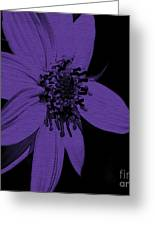 Purple Sunflower Greeting Card