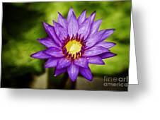 Purple Sunrise Greeting Card