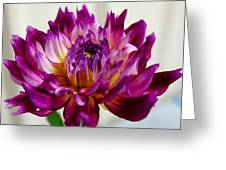 Purple Sunset Flower 1 Greeting Card