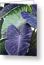 Purple Taro Greeting Card