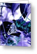 Purple Teal And A White Butterfly Greeting Card