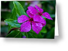 Purple Teardrop Greeting Card